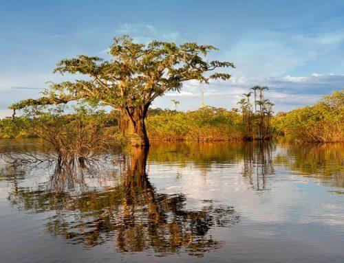 Equateur- arbres coucher soleil amazonie