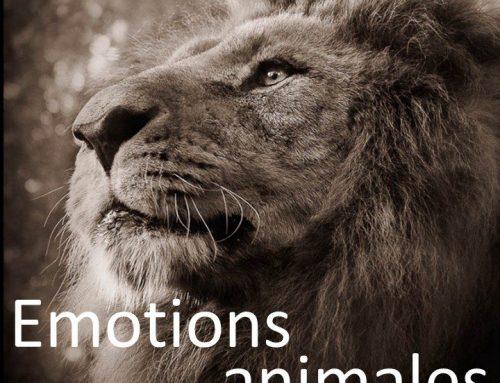 Exposition «Emotions animales» – Galerie «Ici et ailleurs» – Versailles – du 20.06 au 30.09.2016